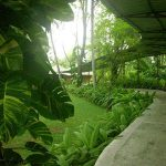 The Palms - Галерея 2