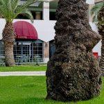 LIMAK LIMRA HOTEL & RESORT - Галерея 6