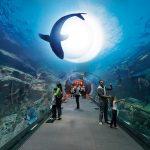 Дубай отдых в марте - Галерея 3
