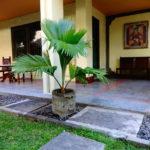 Бали + Куала Лумпур | Bali Bungalow Kuta 3* - Галерея 1