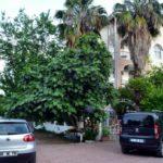 Турция | Ipek Organic Hotel 3* - Галерея 3