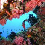 Eriyadu Island Resort - Галерея 3